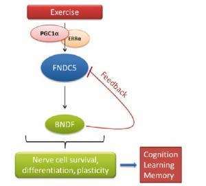 ejercicio-cerebro
