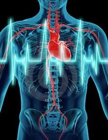 la obesidad afecta al corazón
